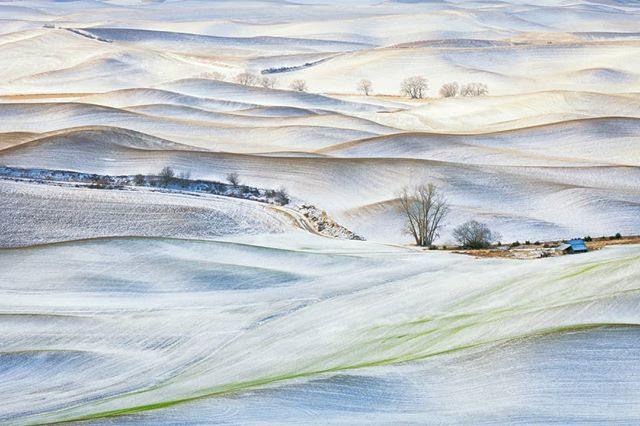 First Snow // at first glimpse this looks like a pencil drawing, but it's an image I captured as a snow event skirted the #Palouse around Steptoe Butte, Washington.  Having this area as my 'backyard' was a great experience, I just wish I'd explored more of the area while there.  #winter #landscapephotography #ig_captures #earth_shotz #upperleftusa #pnw #explorewashington #travelstoke #wonderful_places #beautifuldestinations #ourplanetdaily