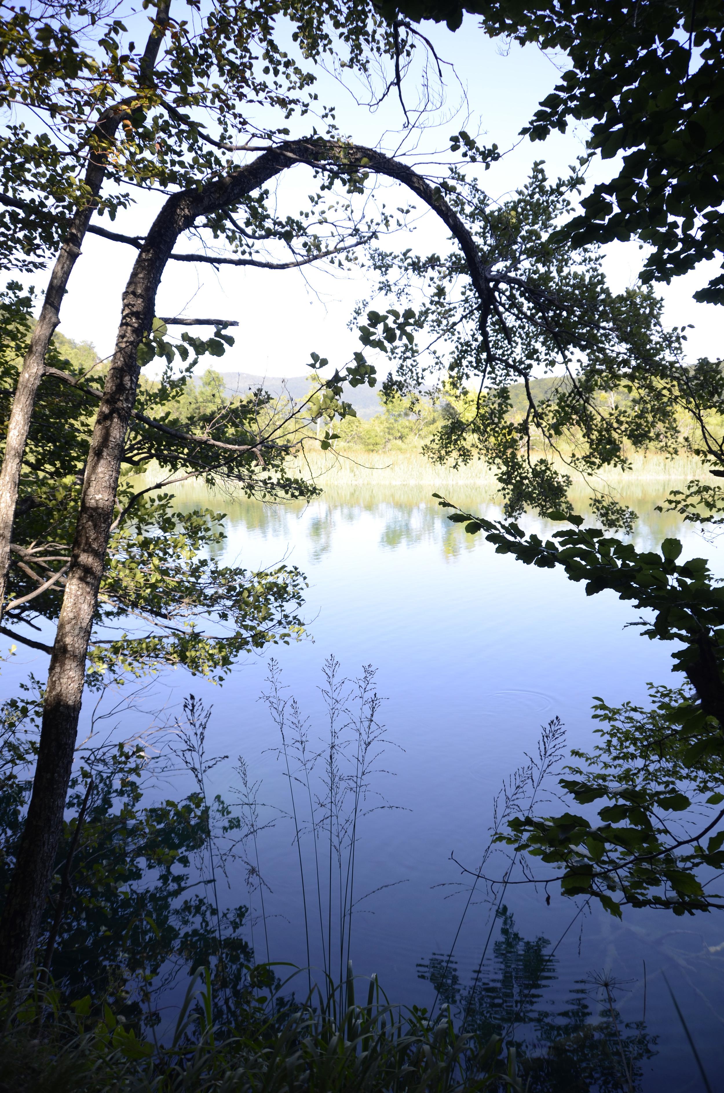 walppaper arbre lac.jpg
