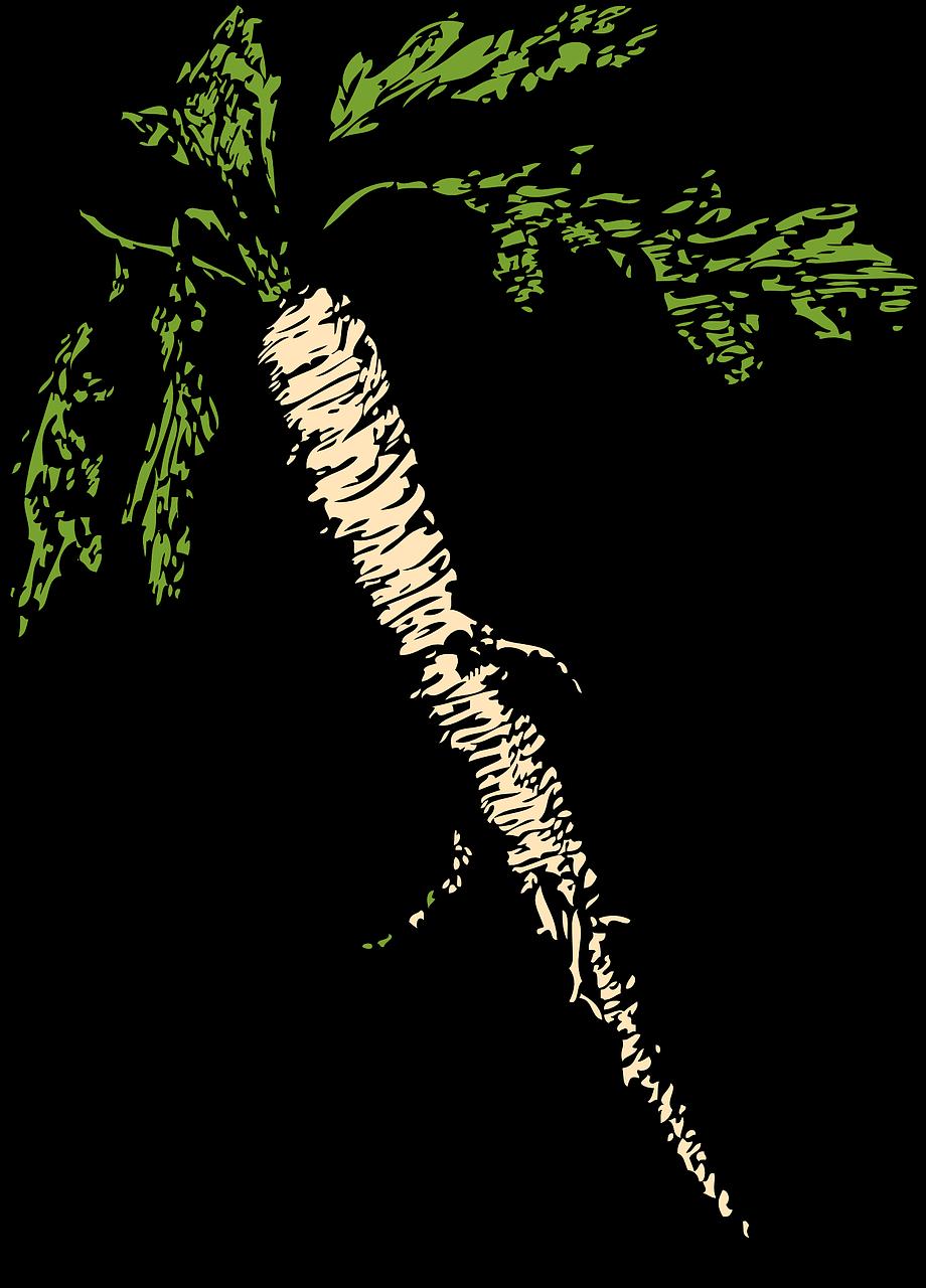 horseradish-32931_1280.png