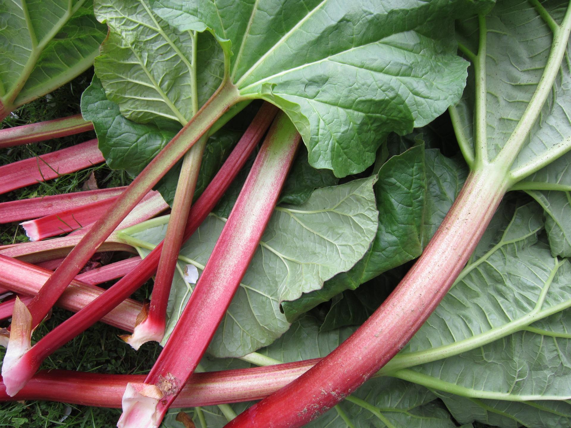 rhubarb-1350969_1920.jpg