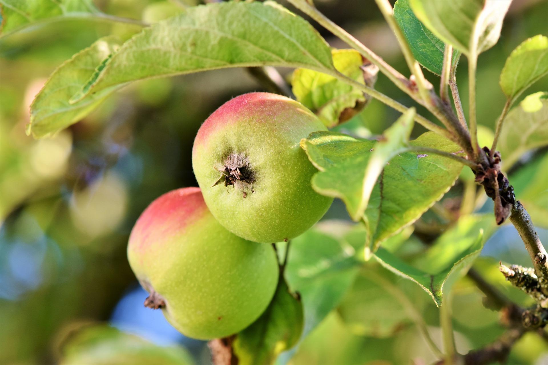 apple-3524113_1920.jpg