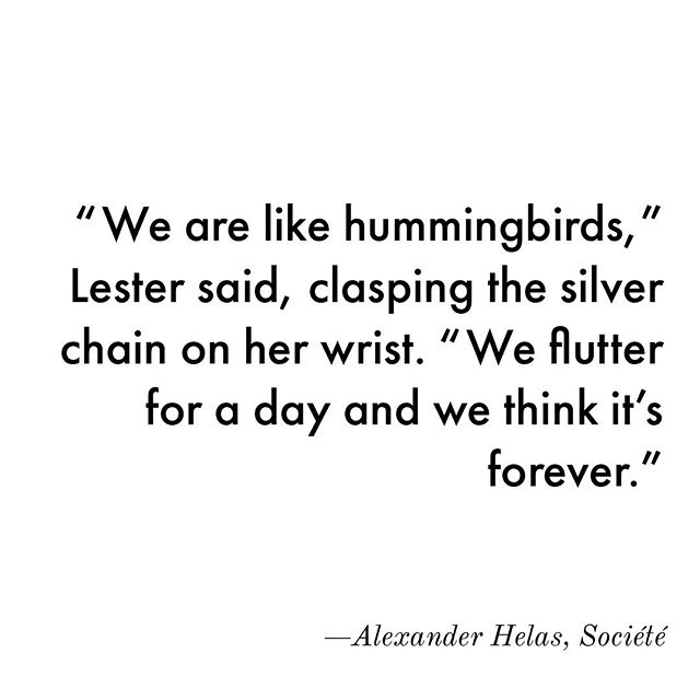Never miss a beat ◾️◼️🌓 •• [From Chapter: The Hummingbird] •• #societe #alexanderhelas #author #novelist #visionary #fiction
