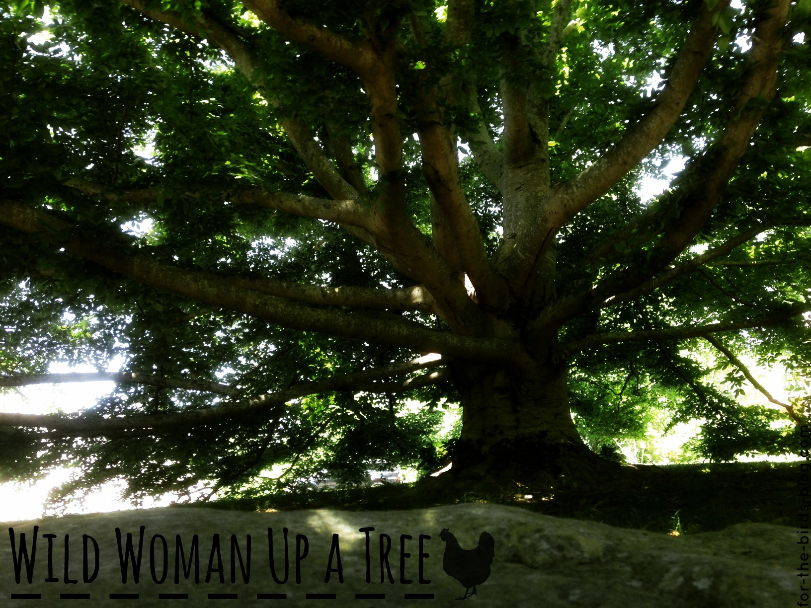 Wild Woman Up a Tree