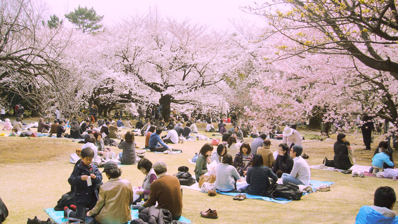 Classic  hanami scene in Shinjuku Park, one of the biggest and most famous green spaces in Tokyo.