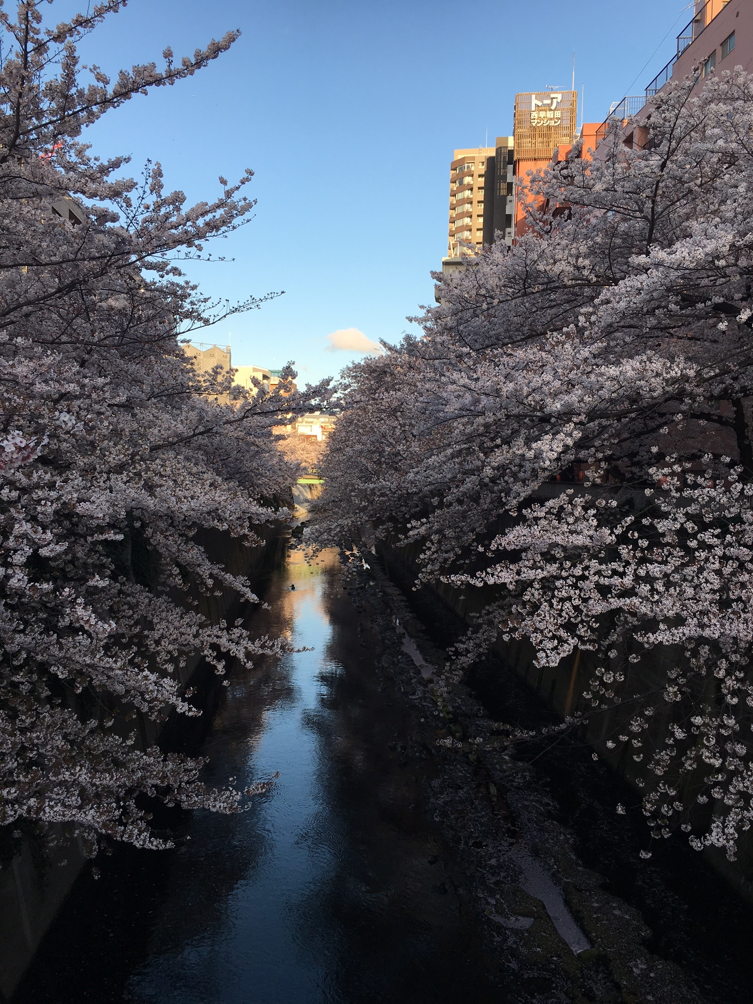 A shot of the same river. Even in the Tokyo metropolis, Japan has so much nature which makes it easy to observe the changing seasons. I really value the times when I can be alone, or at least away from the crowds, while I'm walking through the many parks and gardens which are found throughout the city.