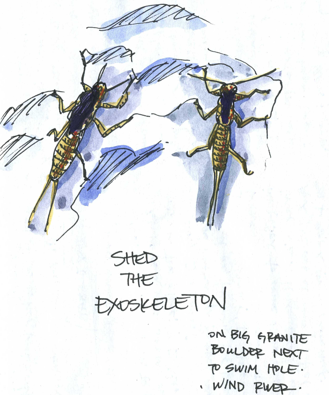 Stonefly Exoskeletons, Wind Rivers, WY