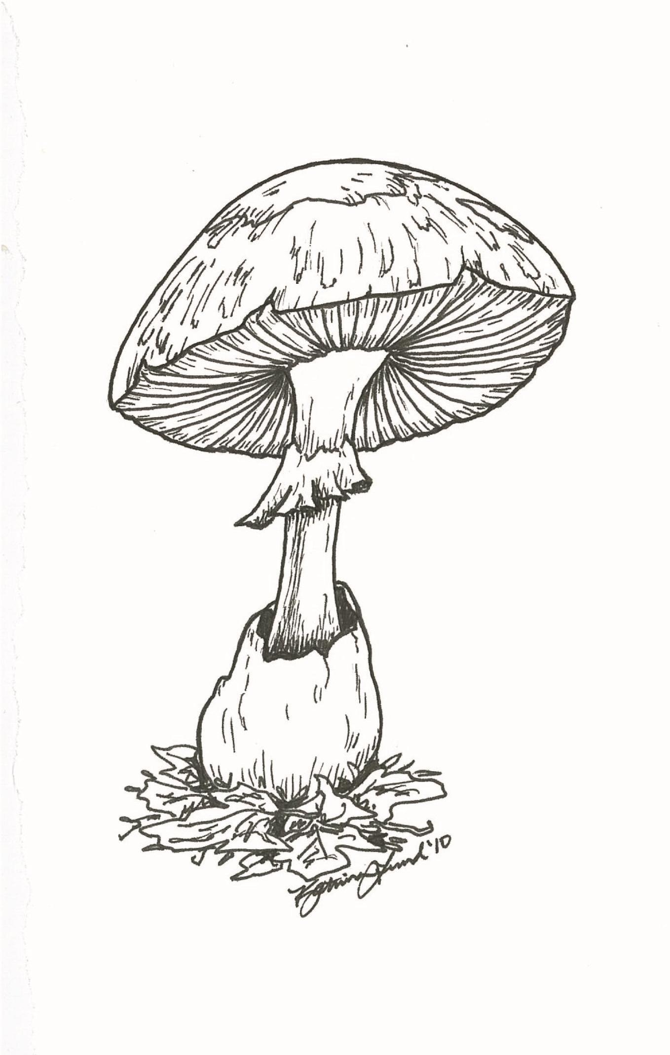 Some Sort of Mushroom