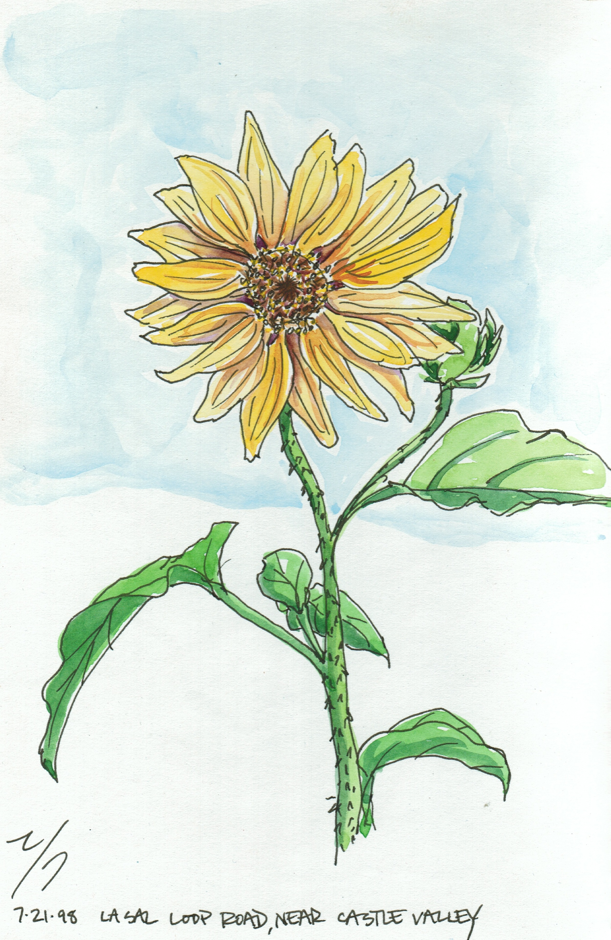 Sunflower1998.jpeg