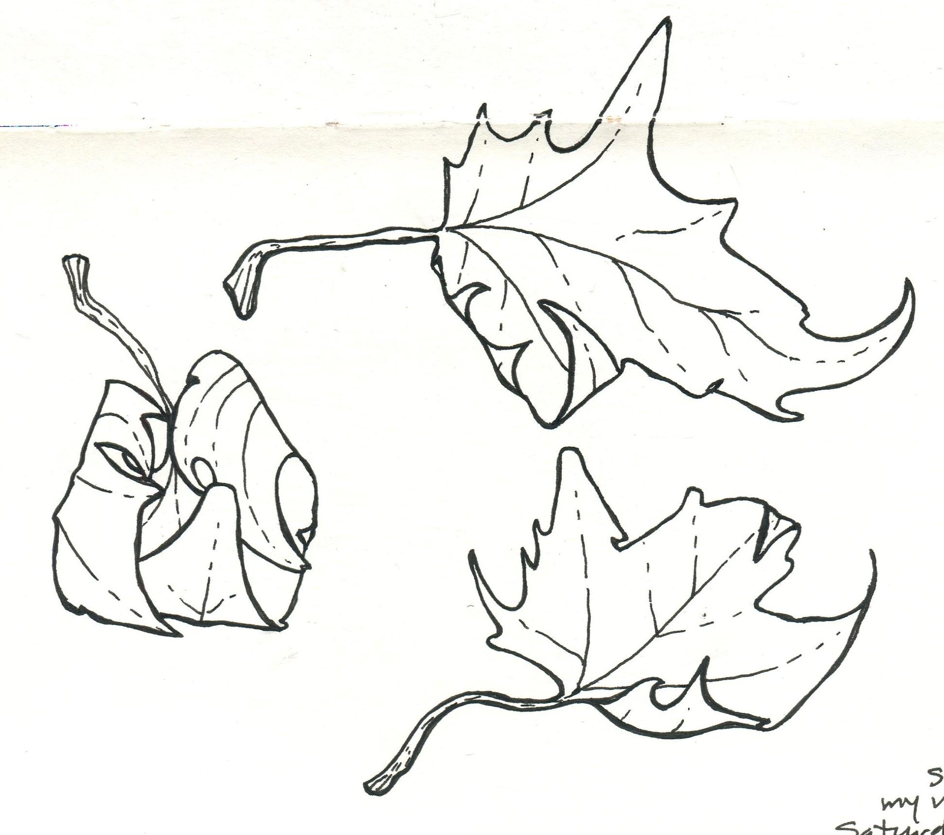 Leaves_b&w.jpg