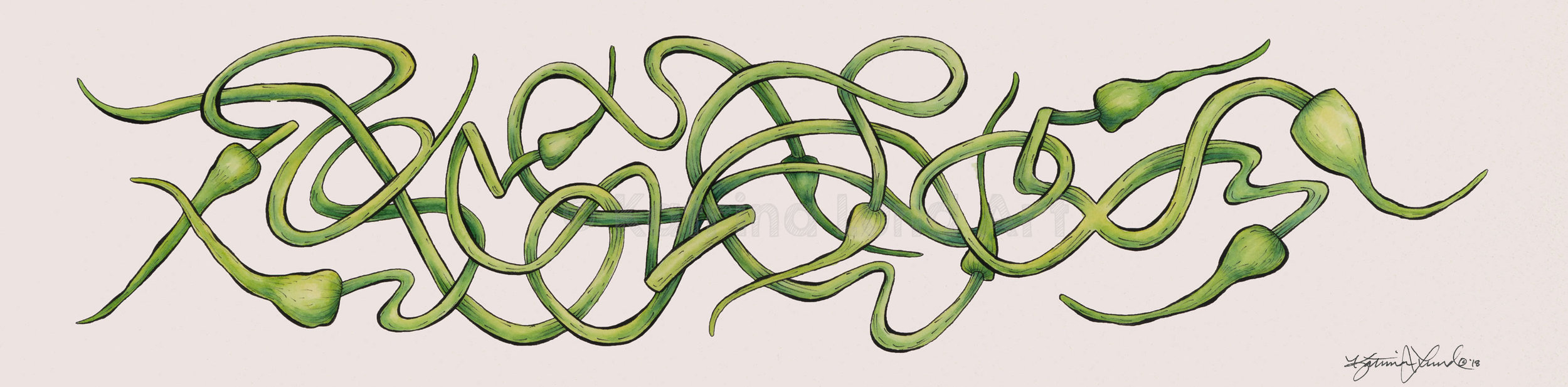 Garlic Scapes by Day