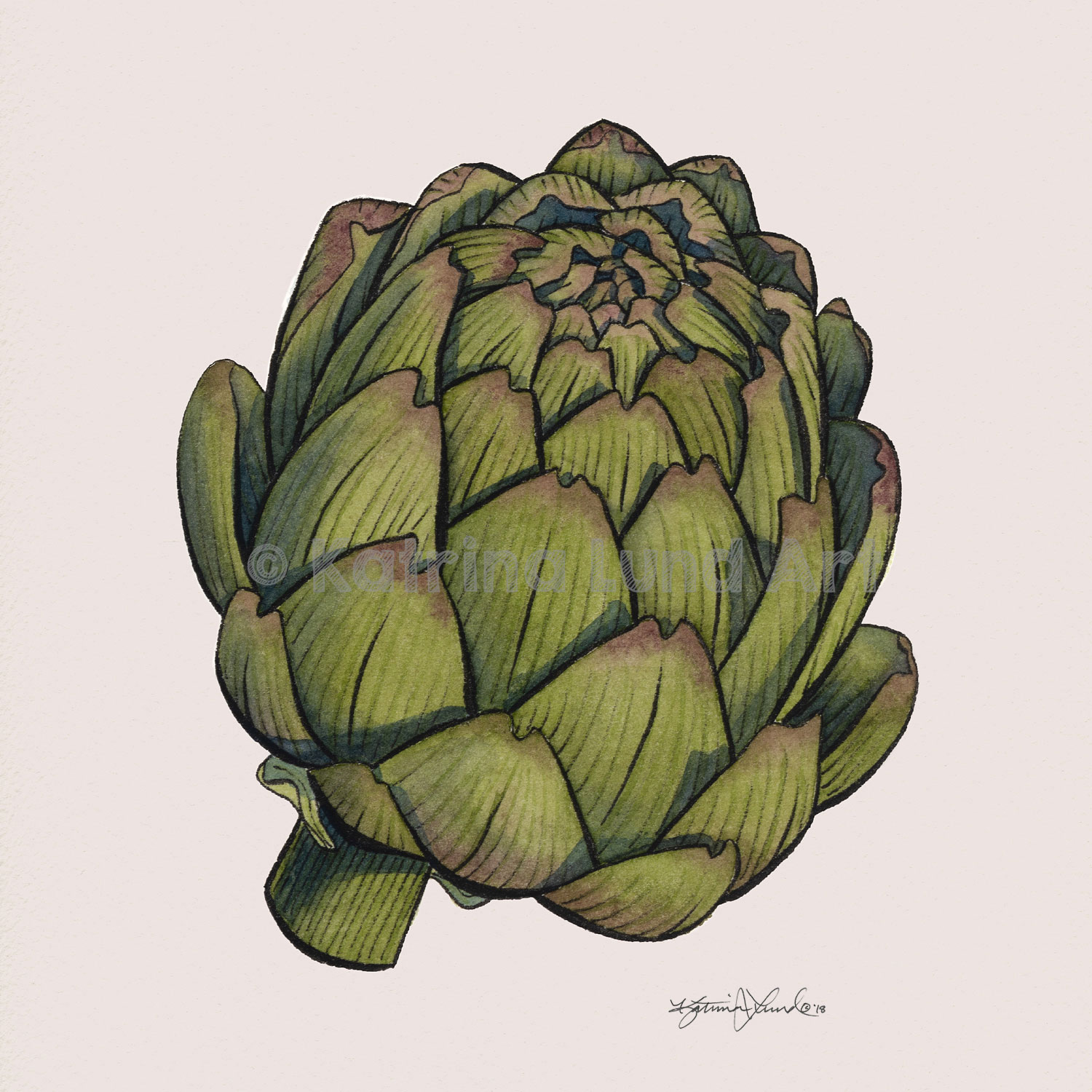 Artichoke by Day,  Pen & ink combined with watercolor