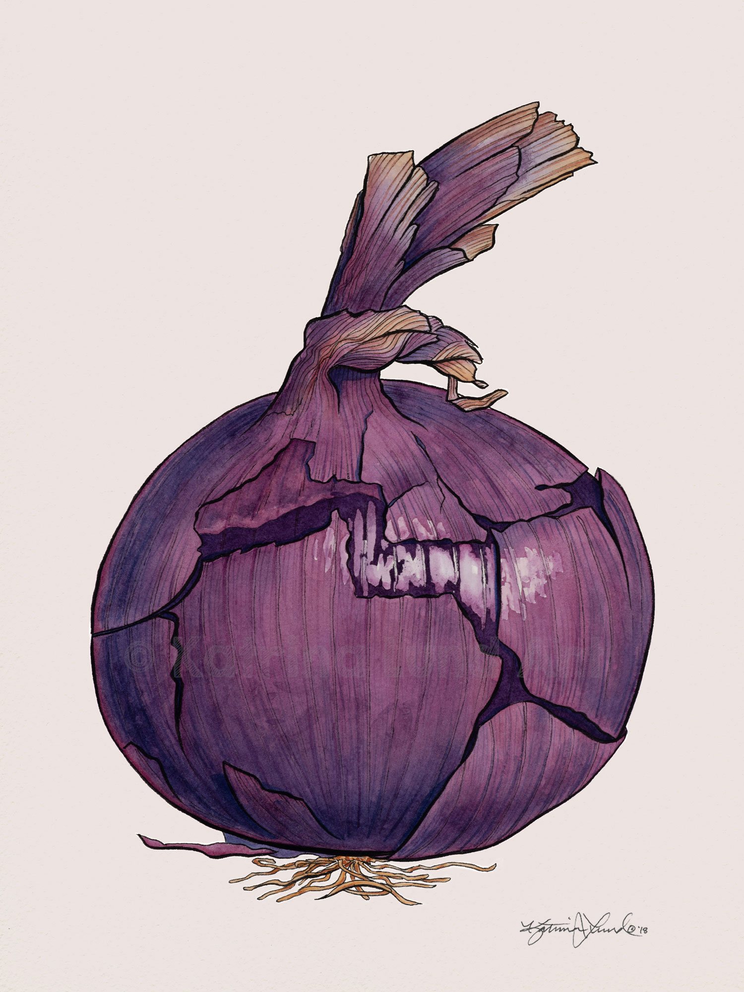 Onion by Day