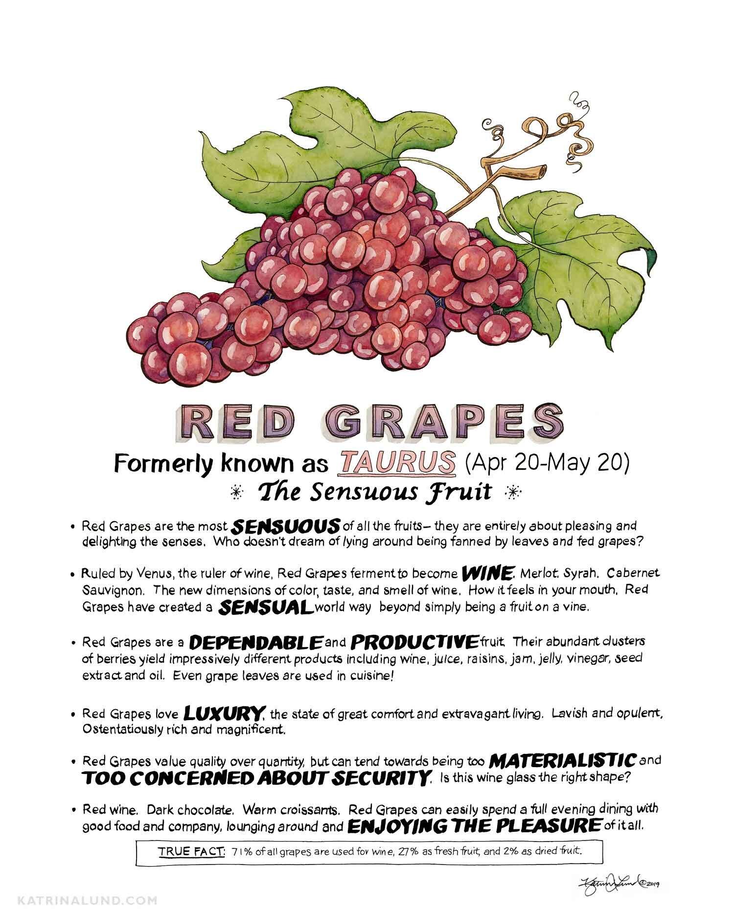 KatrinaLundArt_FruitAstrology_Red-Grapes_web.jpg