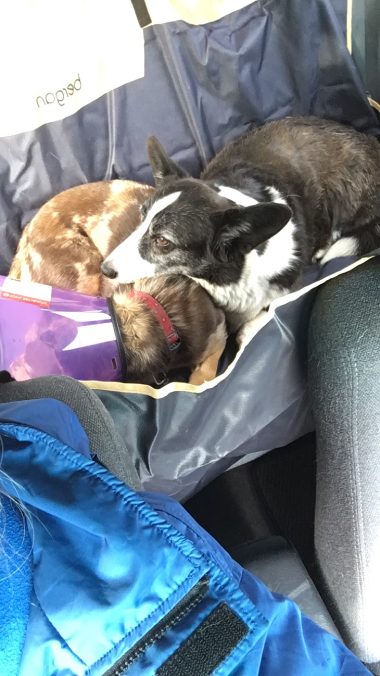 The girls cuddling and enjoying the new seat cover.