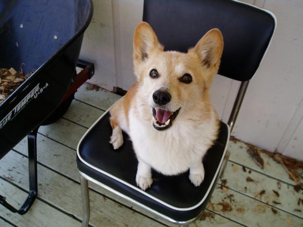 My first dog Dyna!