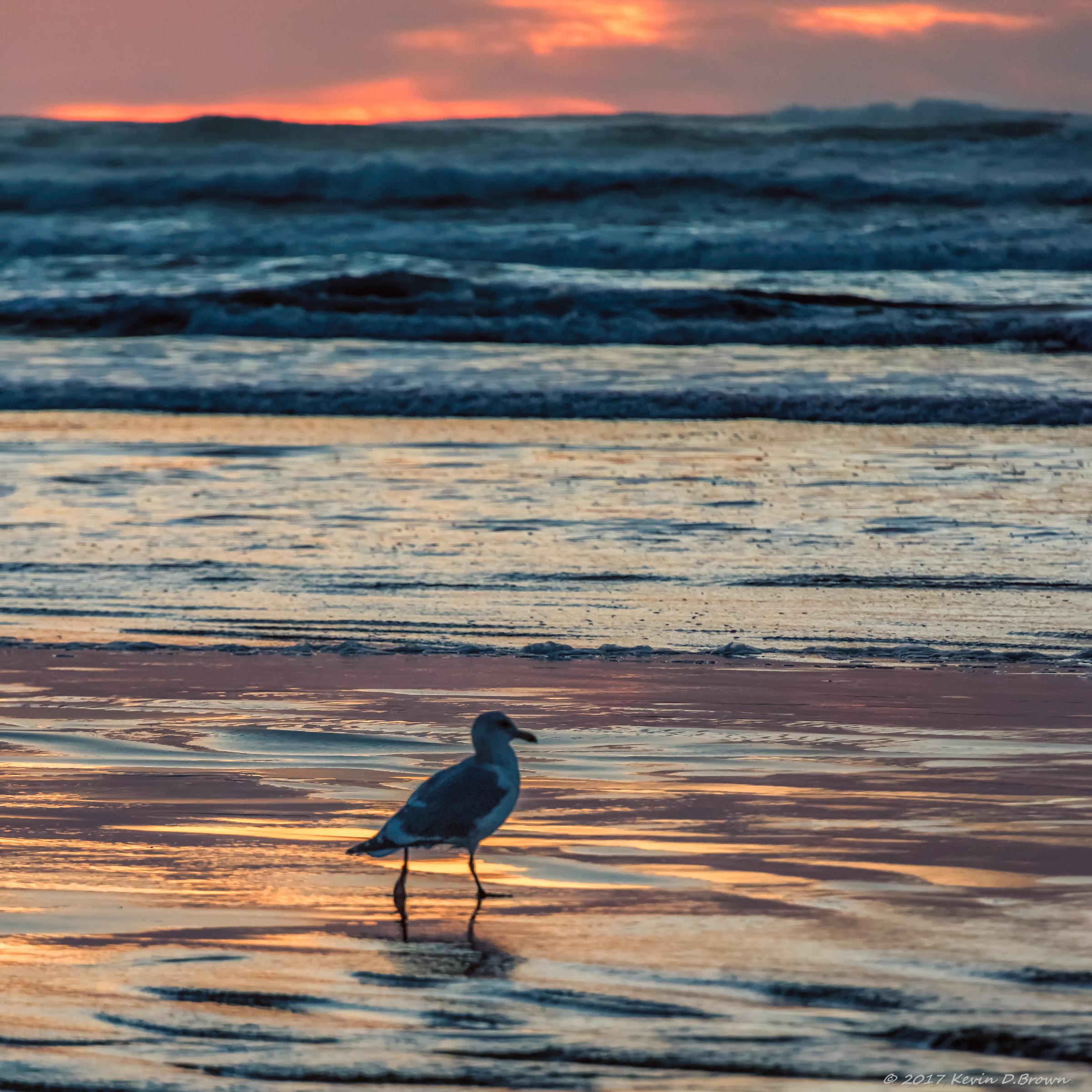 Nye Beach, Newport, Oregon