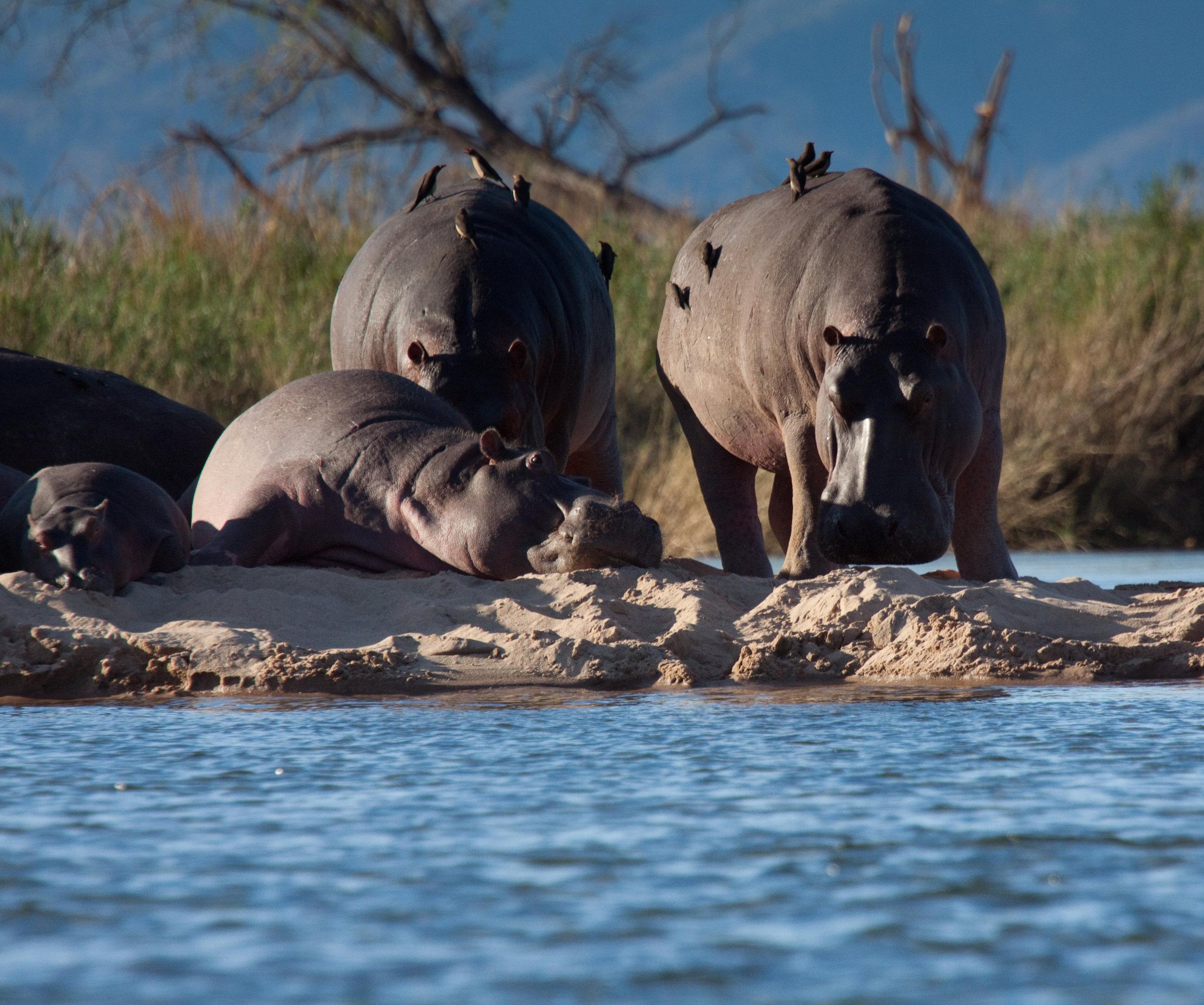 Zambezi River, Zimbabwe, Africa