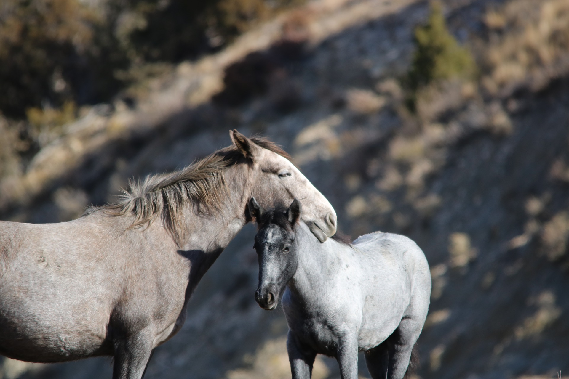 Wild Horses, Theodor Roosevelt National Park, North Dakota