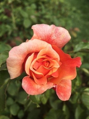 NY Botanical Gardens - 8/19