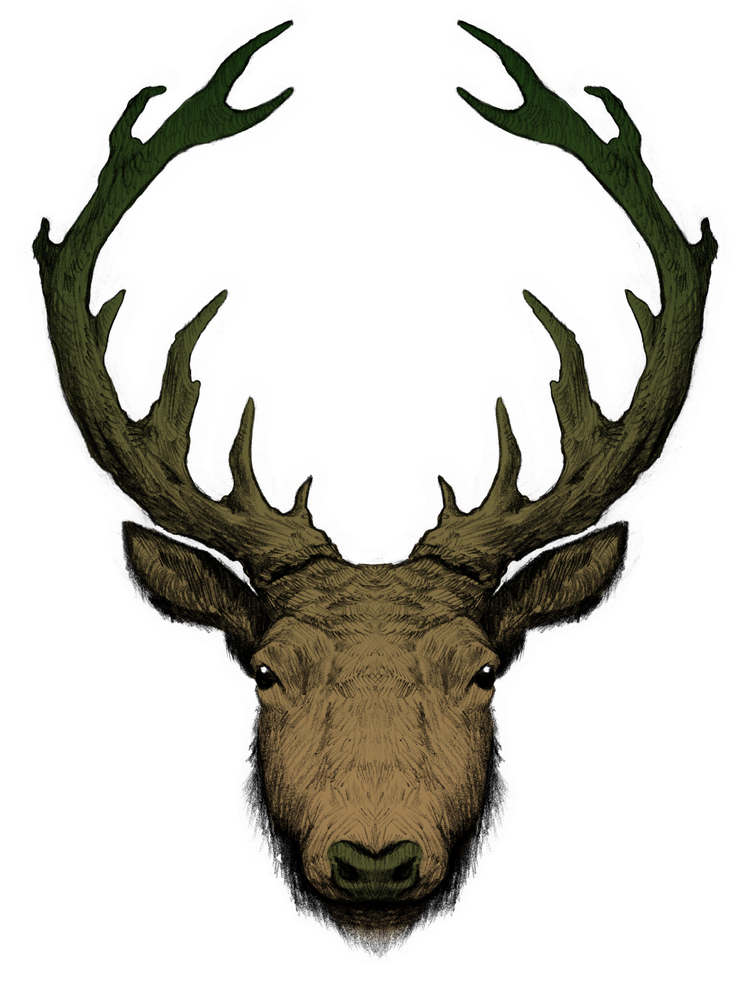 stag+new.jpg