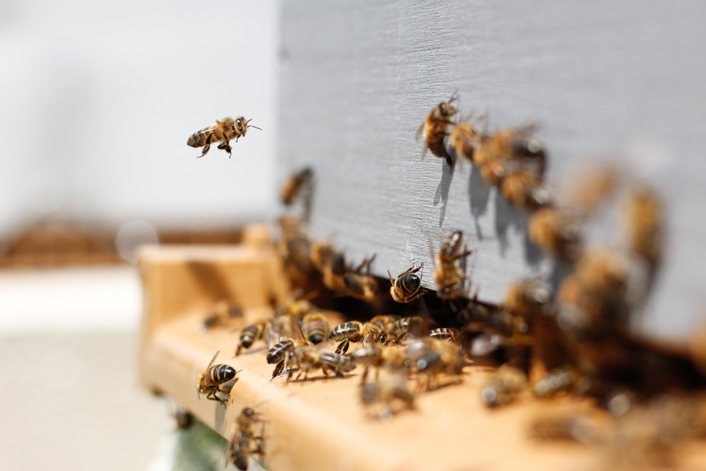 know how this house is so well organized and how the honey is extracted -