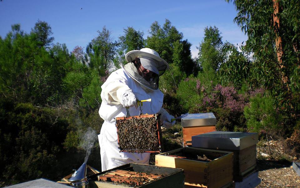 22+Maio+dia+do+apicultor.jpg