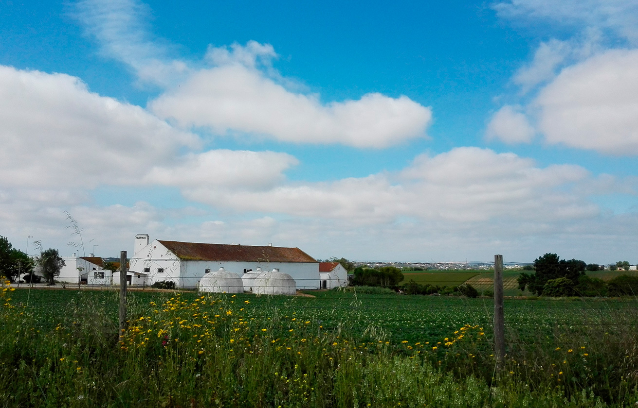 FARM EXPERIENCES WITH THEMATIC LUNCH WITH THE FARMER -