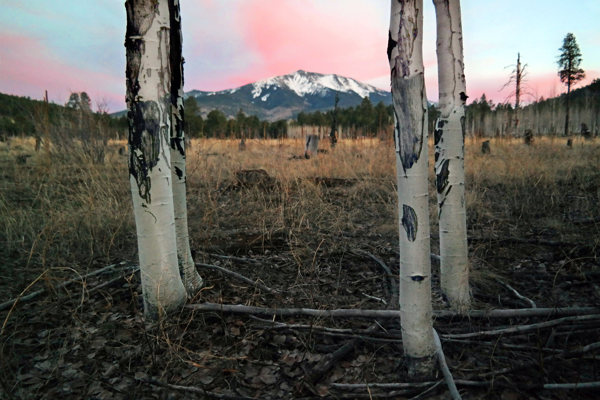 Sunset at Kendrick Park over the San Franciso Peaks, Flagstaff, AZ