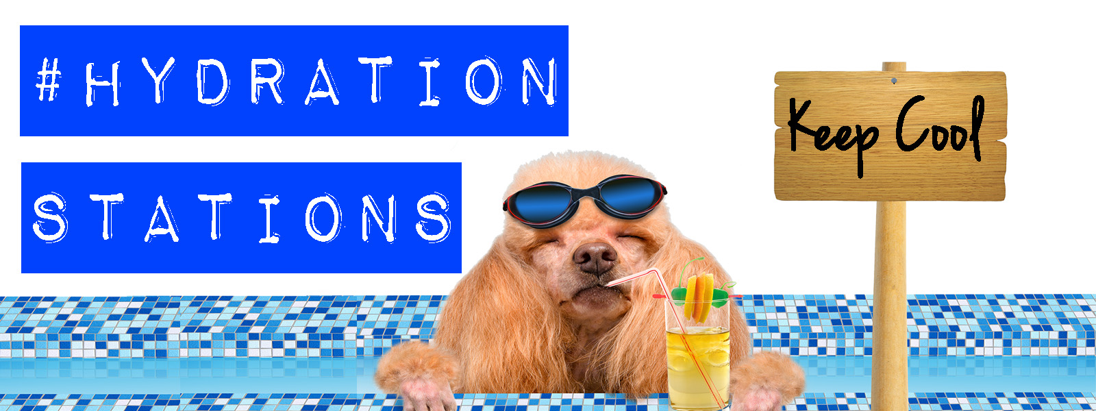 There will be cool down stations throughout the property to make sure fido is kept cool as a cucumber during the day