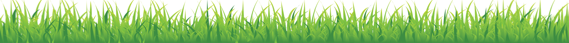 Grass-for-Sprout.png