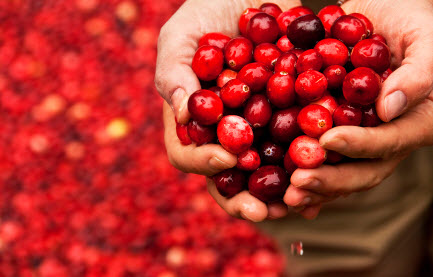 pomegranate extract improves prostate cancer