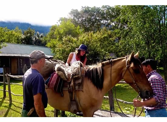Mollie Horse.jpg