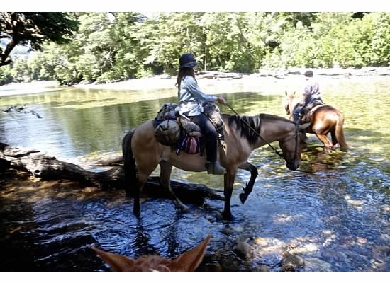 Mollie Horse 4.jpg