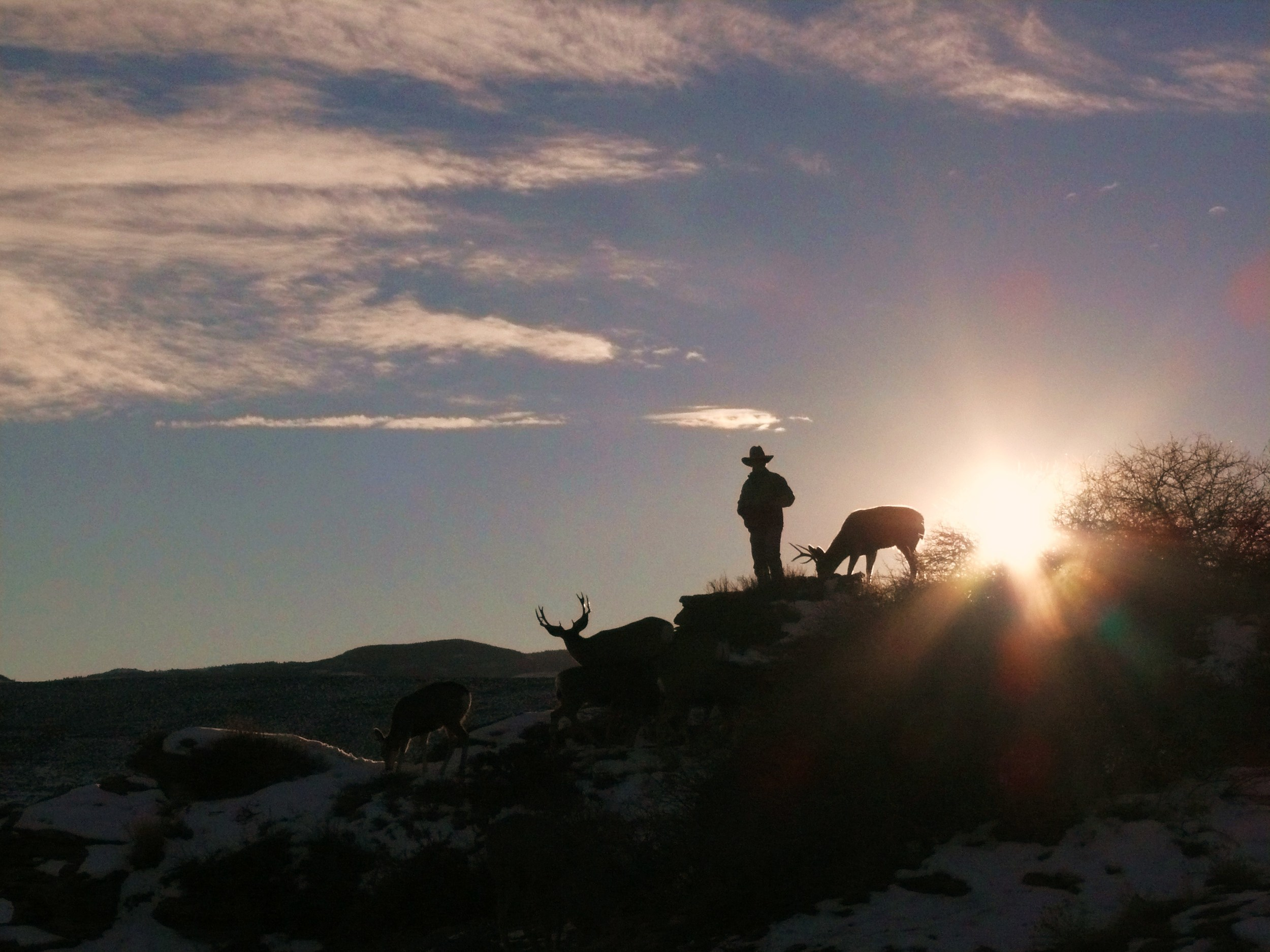 Joe Hutto stands with members of his herd of mule deer near Lander, Wyoming. (photo courtesy joe hutto)