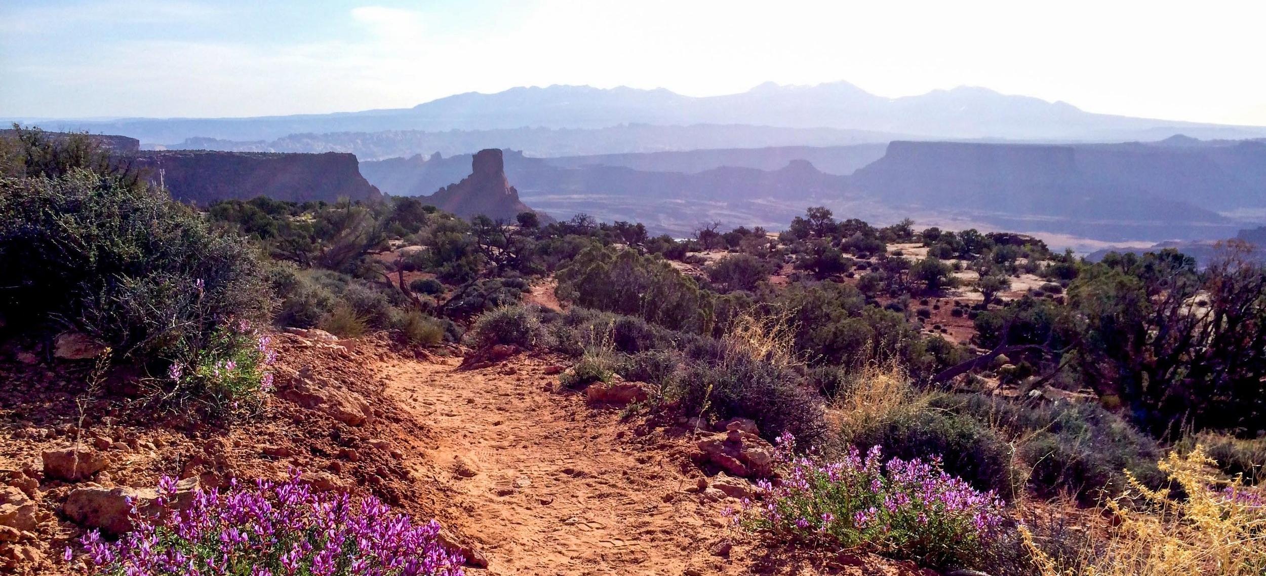 the desert near moab (photo by willow belden)