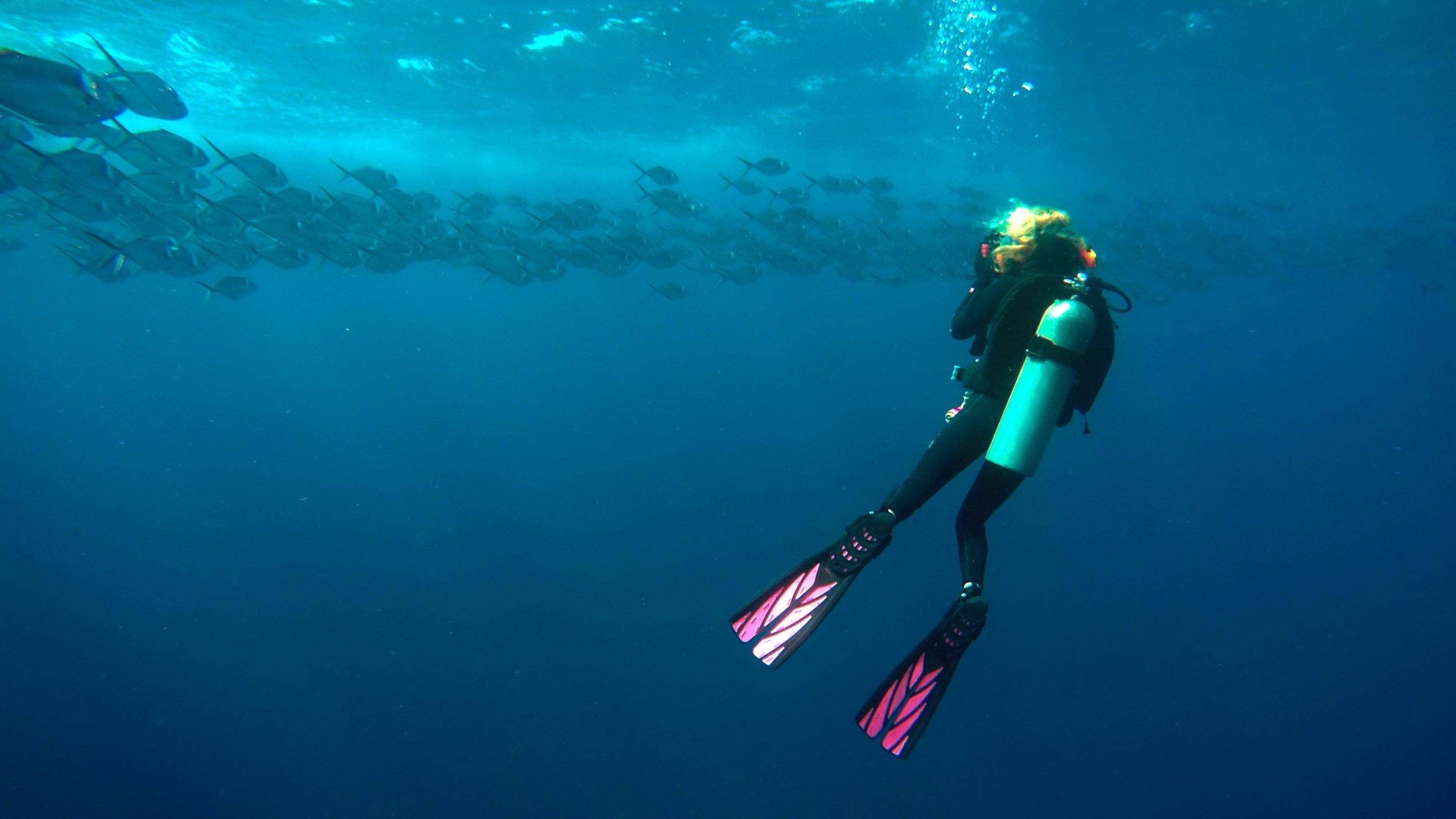Scuba dive in the Galapagos. (Photo courtesy Tiffany Duong)