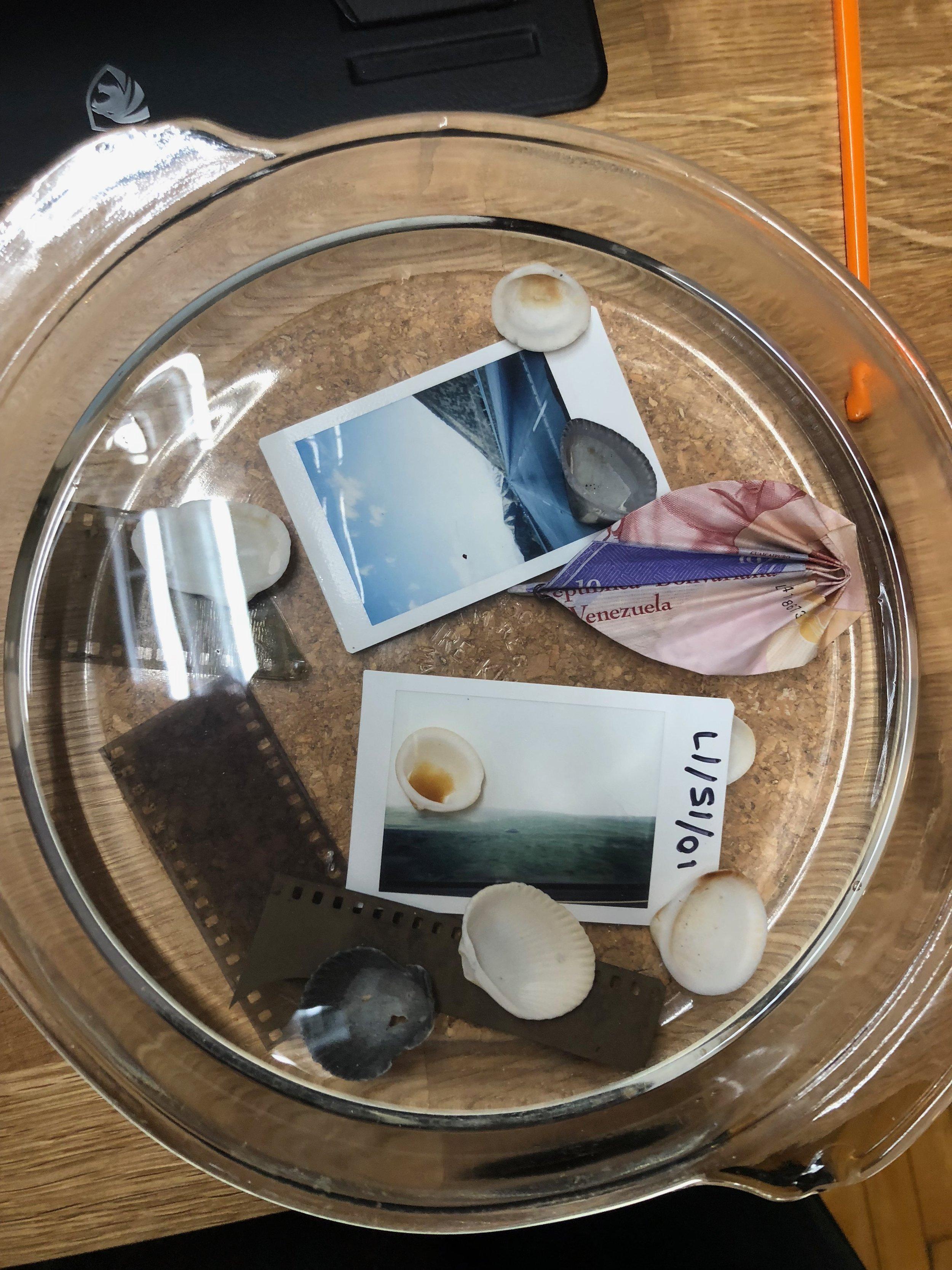shells, polaroids, and Venezuelan money