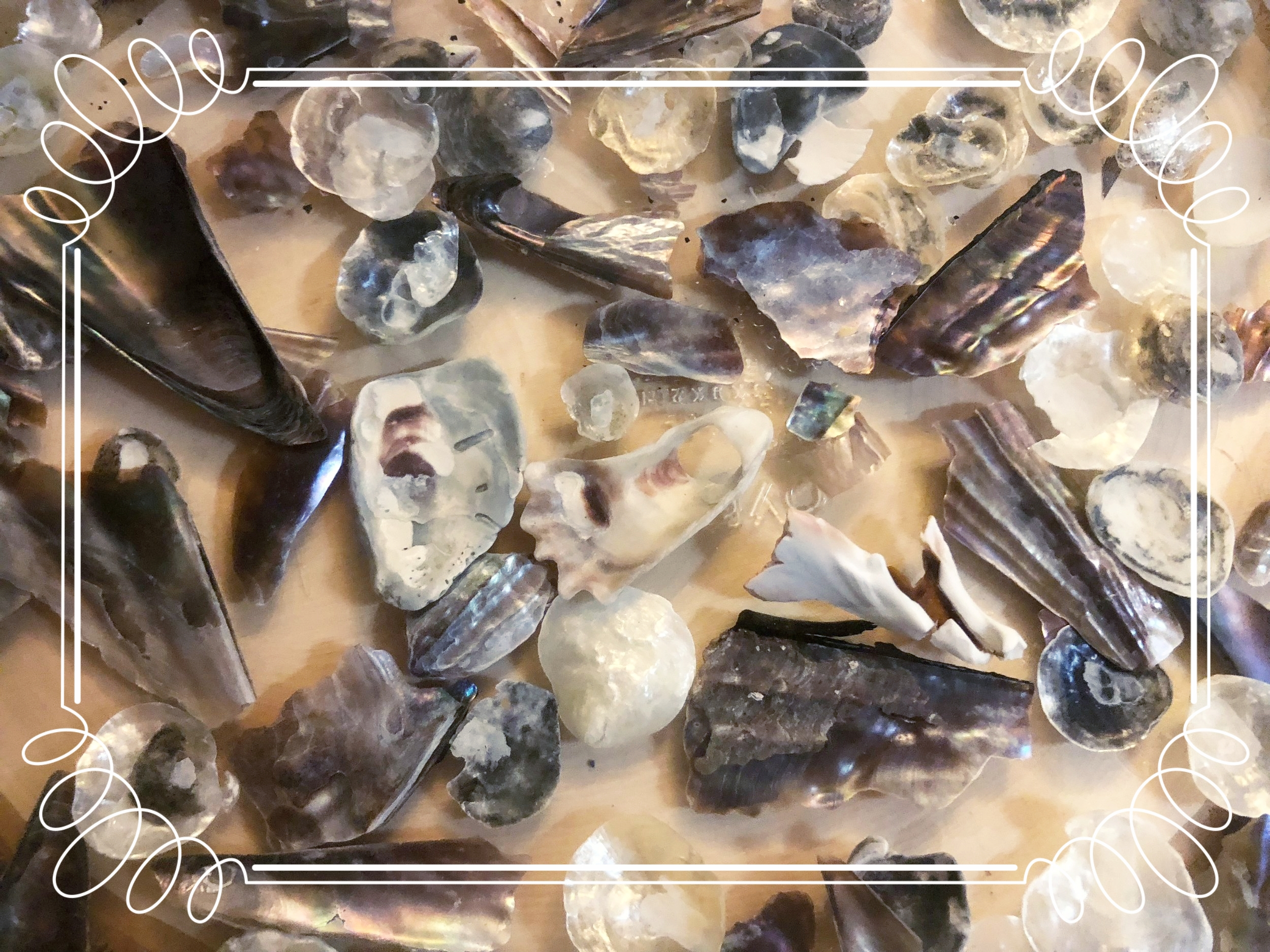 assemblages - #process #crystallization #shells