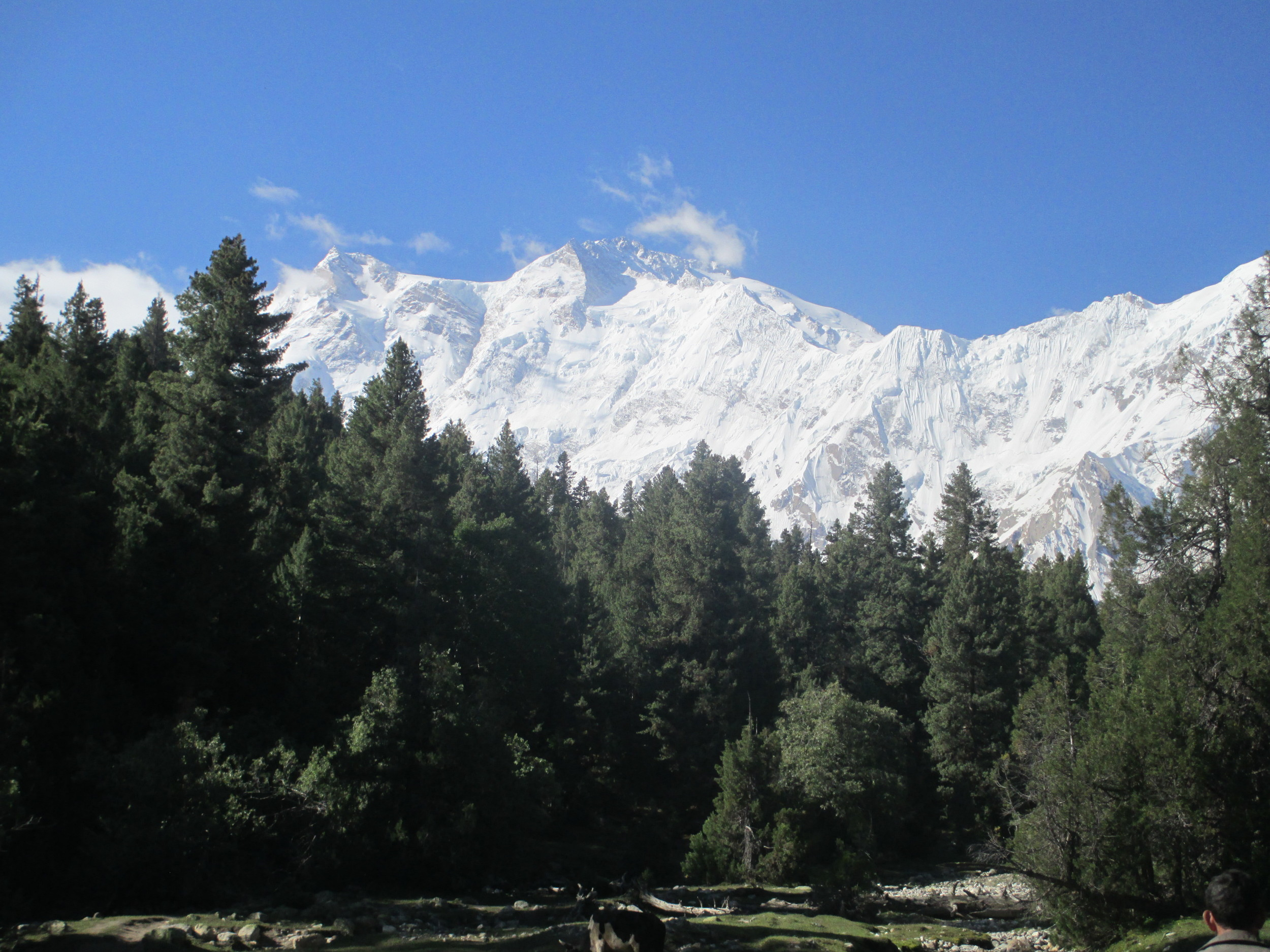 Nanga Prabat from Fairy Meadows