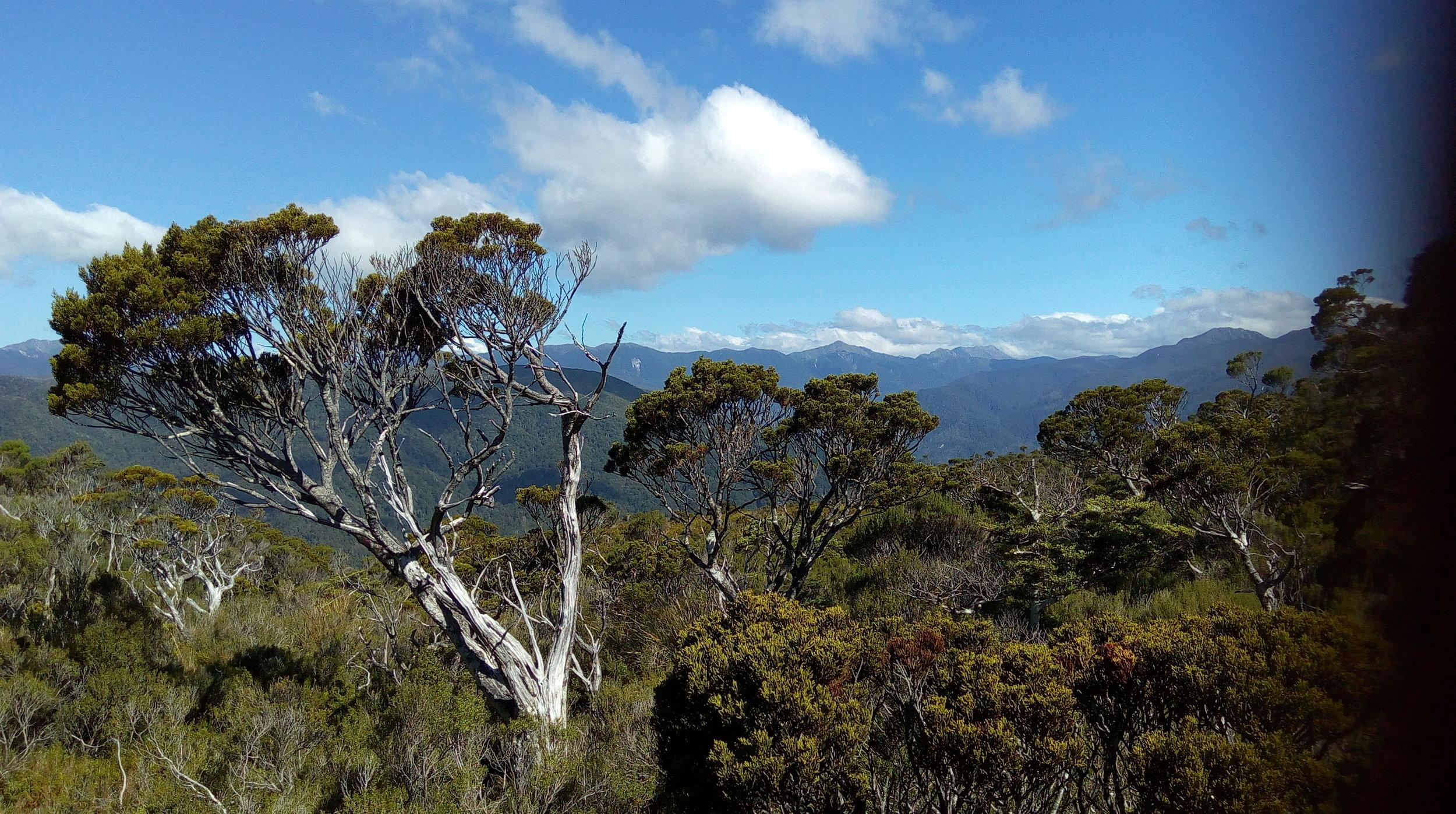 A short run alone thru bush led to this opening revealing the vast Tasman wilderness area.