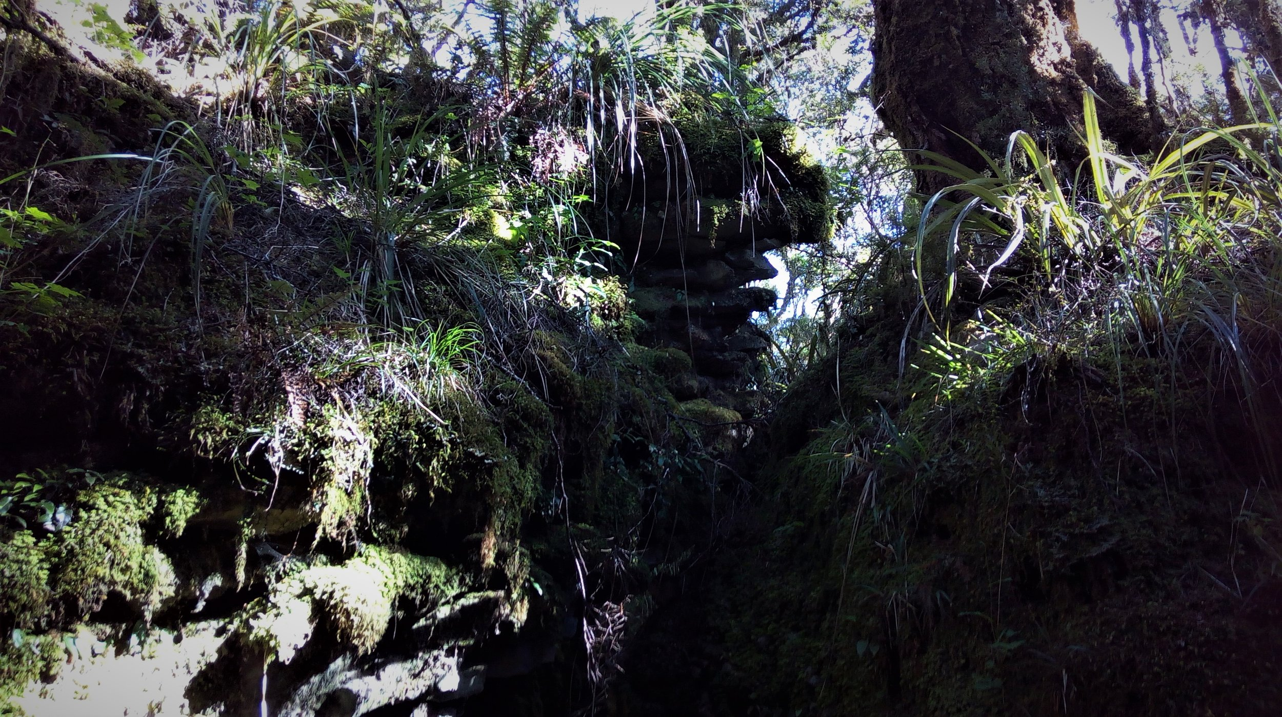 Dense bush in the Enchanted Forest