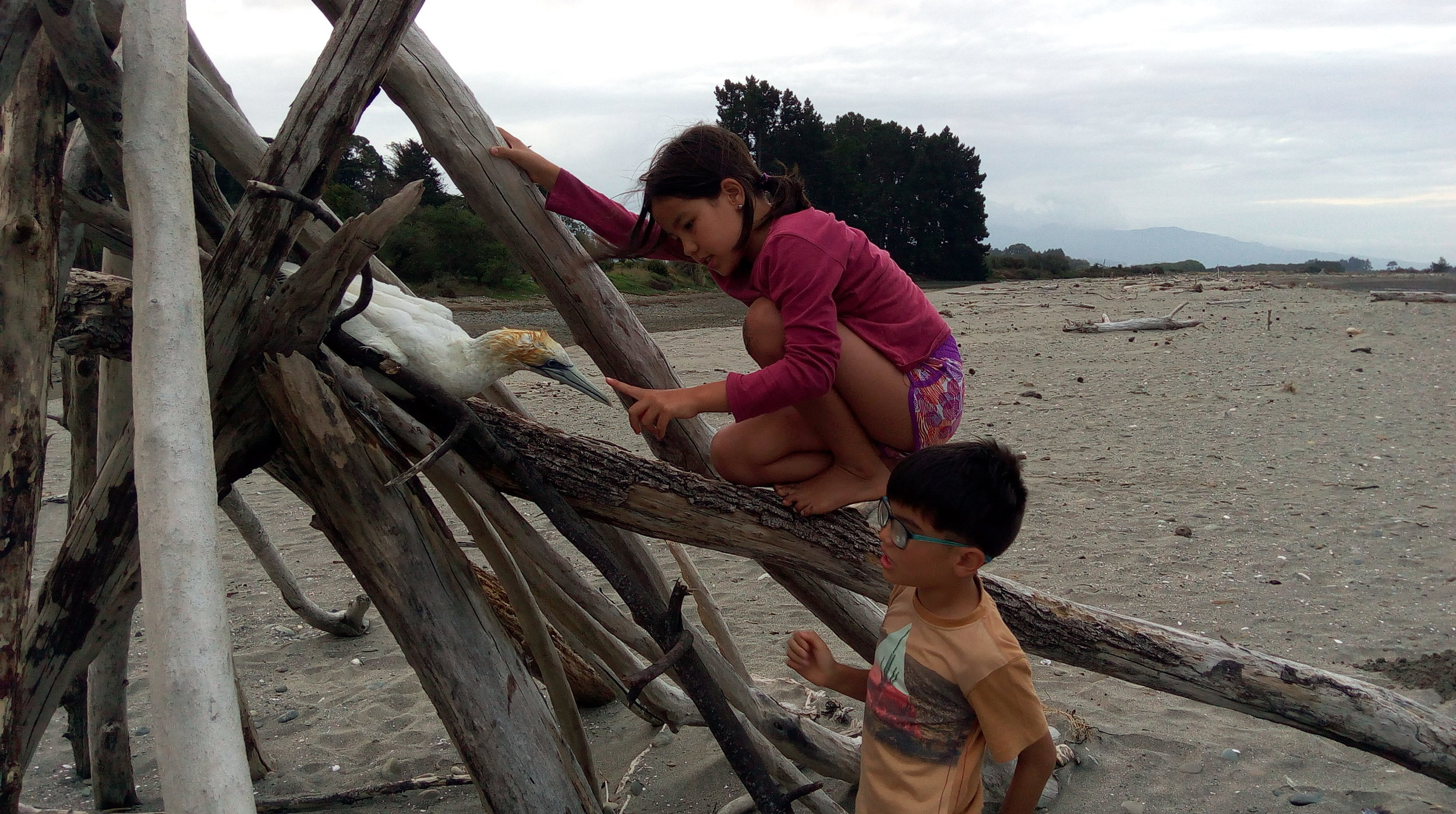 Isabelle and Leo make freinds with a Gannet back in Motueka