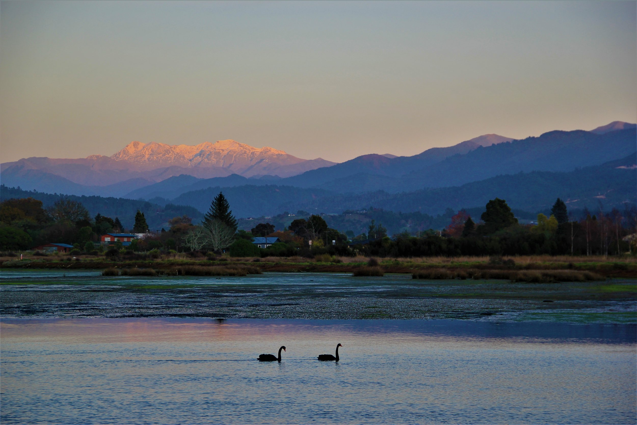 Looking West to the Arthur range on an early winter dawn. The Black swans live at the Nelson lakes during summer but migrate North and lower to the more benign climes of the Motueka estuary for winter.