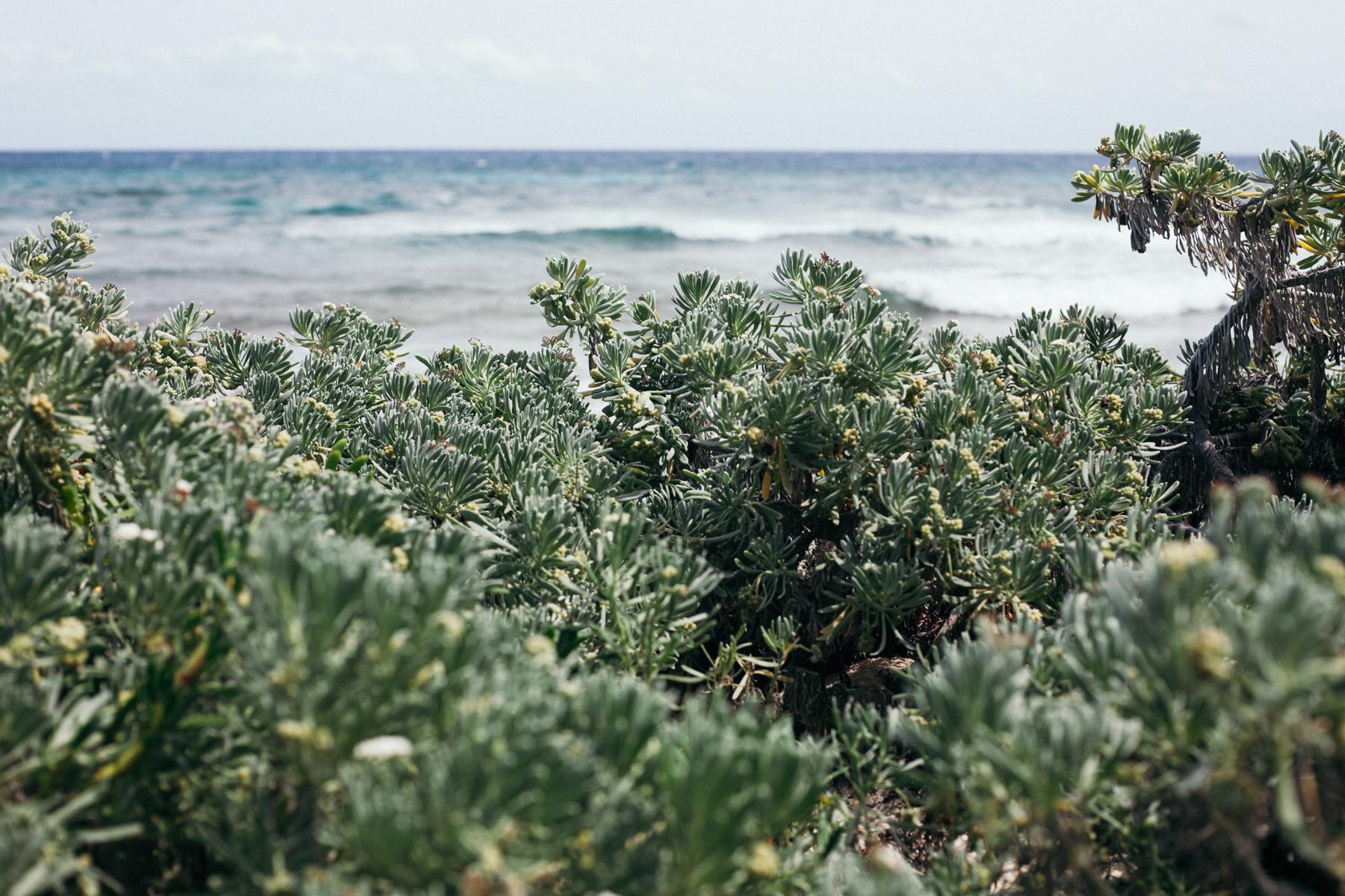 Caribe-27.jpg