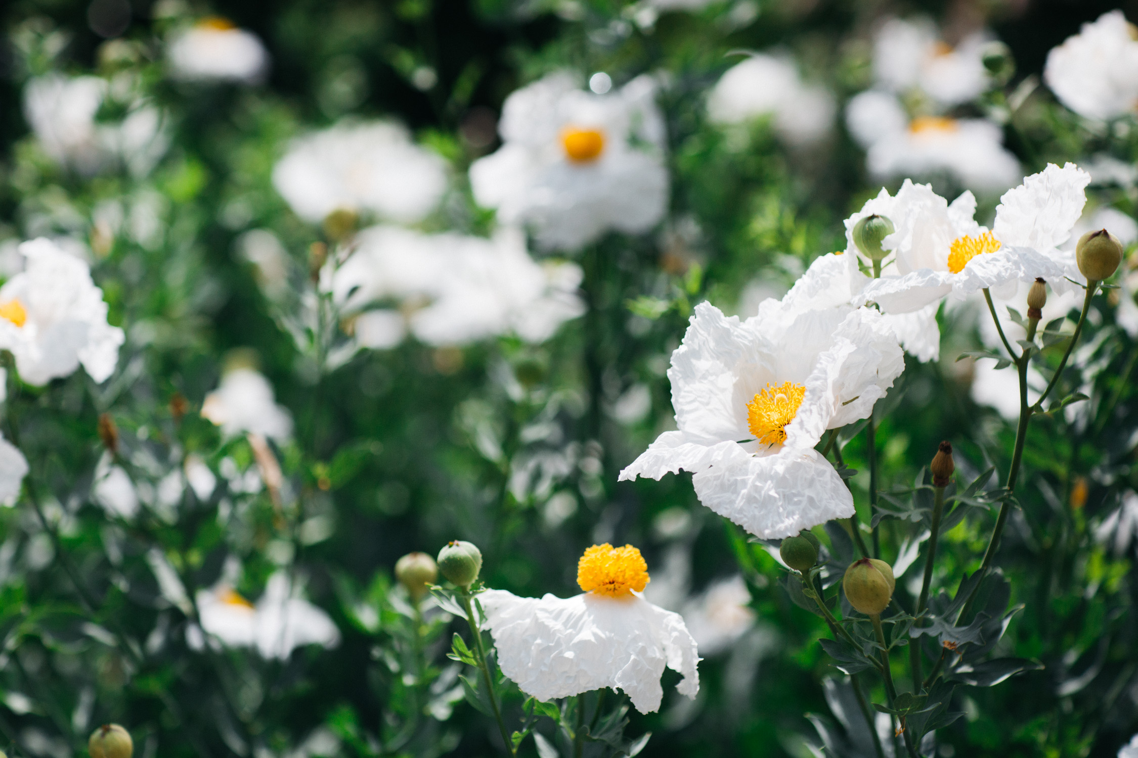 Arboretum-2018-Web-11.jpg