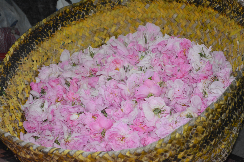 A basket full of freshly picked beauties.