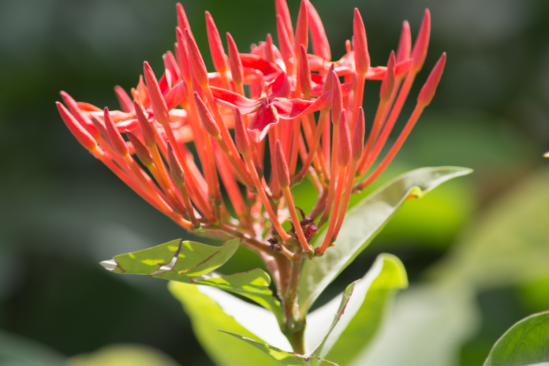 Flora-0039.jpg