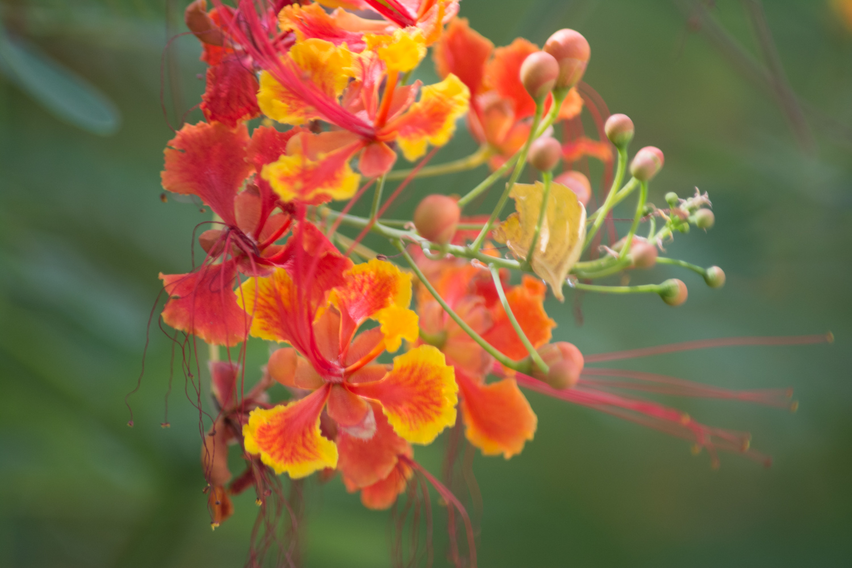 Flora-0091.jpg