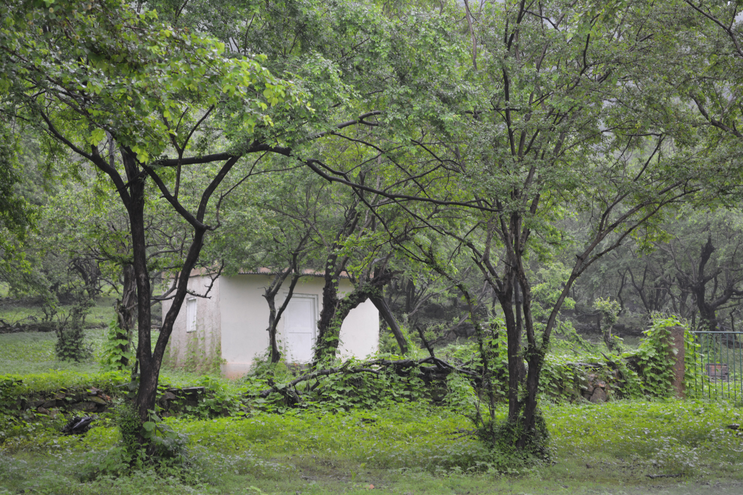 A property nestled in the trees.