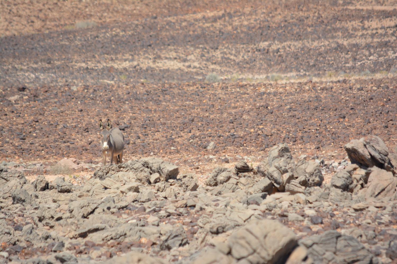Donkey camouflage.